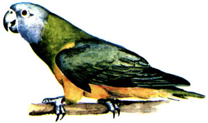 Дети и «говорящие» птицы