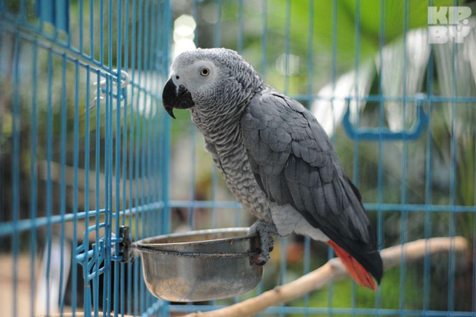 Только ли попугаи?